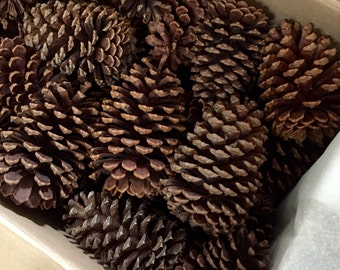 Box of 48 Lg Natural Pinecones