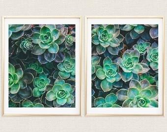 Succulent Diptych, Cactus, Succulents, Diptych, 2 Panel Art, 8x10, Print Set, Gallery Wall, Home Decor, Instant Art, Fine Art Photography