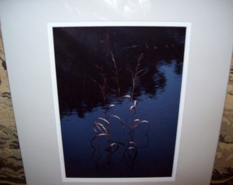 Swamp Weeds Photo Print Certified Fred E. Nathanson 1997