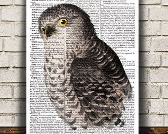 Owl art Wildlife print Animal print Bird poster RTA796