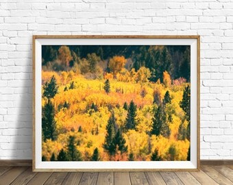 "photography, forest, woodland, fall, instant download art, printable art, photography, instant download, trees, leaves - ""A Grand Variety"""