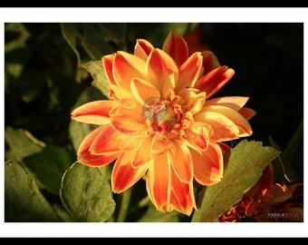 Photography print - flower