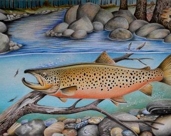 River Feeding Brown Trout, Pencil Drawn, Fishing, Art, Canada, Alaska, Flyfishing