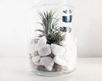 terrarium plant air