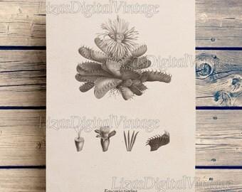 Vintage botanical illustration, Succulent print, Digital print, Print vintage, Artwork download, Succulent decor, Printable art, JPG PNG