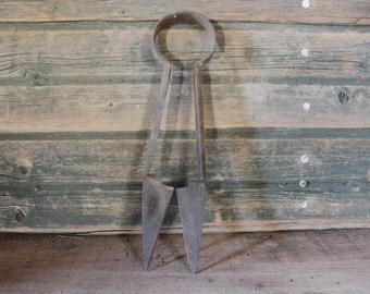 Rusty antique sheep shears