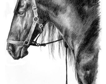 Black Stallion (Mounted Print)