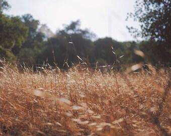 Fields - Straw - Hay Photo - Field Photo - Digital Photo - Digital Download - Instant Download - JPG