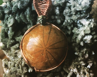 Fossilized sand dollar with pyrite copper wire wrap pendant
