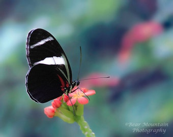 Butterfly Photography: Black and white photography, Fine Art Photography, Black Butterfly, photography, nature photography