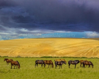 Storm Clouds and Horses: Fine Art Photography