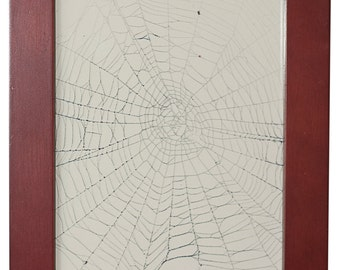 Spider Web | Argiope Spider Orb Web | Real Spider Web | Framed Spider Web