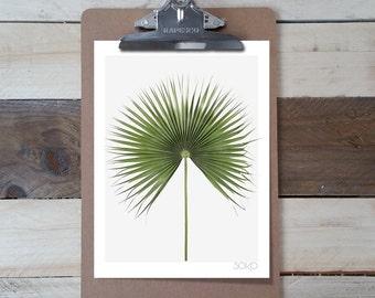 Table block note photo print sheet Palm (Fan Palm). Botanical and tropical decor