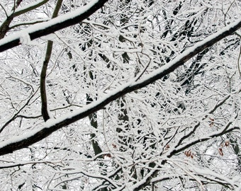 Snow Covered  Branches  Free Shipping  Giclee prints