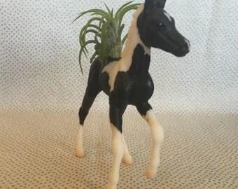 Horse air plant holder + air plant