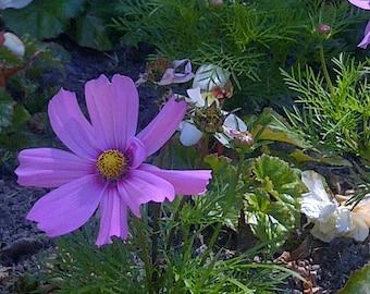 Flowers In Bloom 3