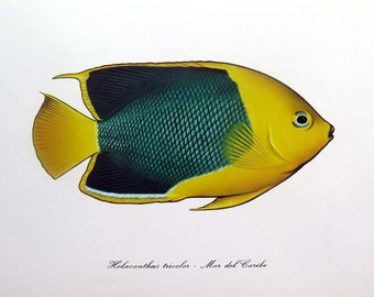 Antique ellow FISH print, vintage  rock beauty lithograph, 1975  sea life  FISHES color lithograph, oddity marine animal color engraving