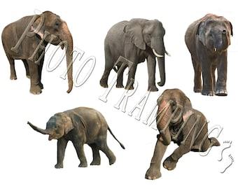 Elephant Overlays