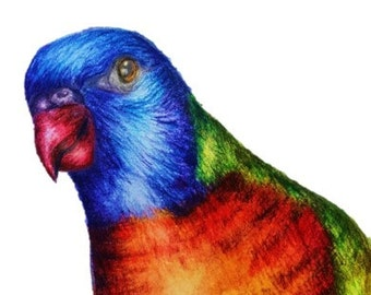 Fine art print, pencil sketch, coloured pencil art, gift card, bird sketch, bird art, rainbow lorikeet art, rainbow lorikeet, bird print