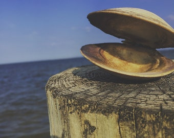 Jersey Shore Clam