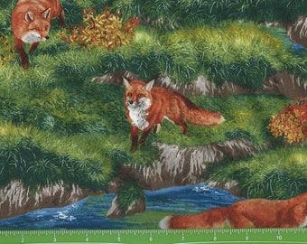 Awesome foxes at play,bringing nature home ,Robert Kaufman