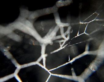 11 x 14 Frozen Spiderweb Fine Art Macro Photography Print