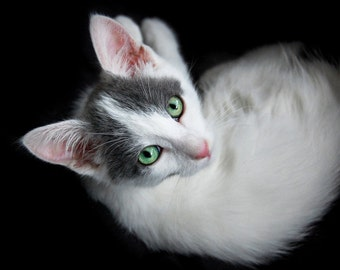 Photo portrait of white and grey kitten