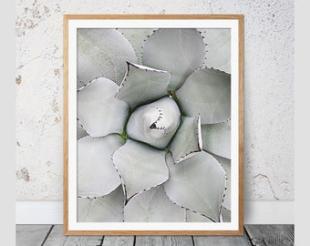 Cactus, Succulent, Cactus Print, Cactus Art, Black and White Photography, Modern Wall Decor, Cactus Photography, Cactus Poster, Cacti, 112b