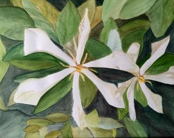 Key West flowers