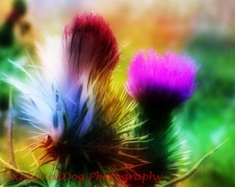 Bright Impact Thistle Flower