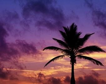 Palm Tree Silhouette on Sunrise