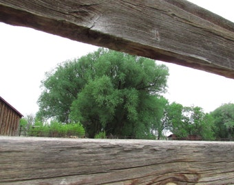 Between the Wooden Fence, Photography Print, Wall Art, Decor, Trees, Nature, Colorado