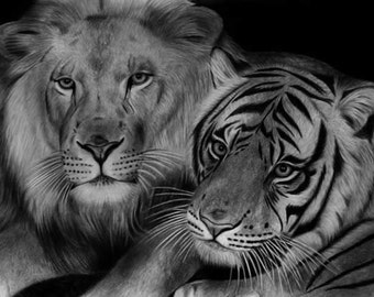 lions and tigers sketch