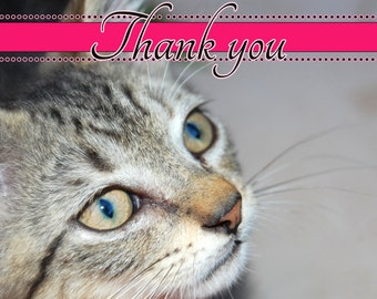 """Cat note cards / Thank you cards - set of 12 / Birthday card 5x7 (1) """"charlie"""""""