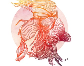 Red Siamese Fighting Fish Print (Betta) - illustration in red and orange of a red tropical fish. Giclee print in A4 or A3