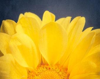 Yellow Flower Print, Flower Wall Art, Yellow Flower Photography, Floral Wall Art, Nature Photography, Yellow Flower Art Print