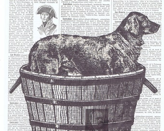 Dog.Canine.antique book page print.vintage illustration.paris.french.gift.child.nursery.den.home deco.art.pet.mans best friend.eco.christmas