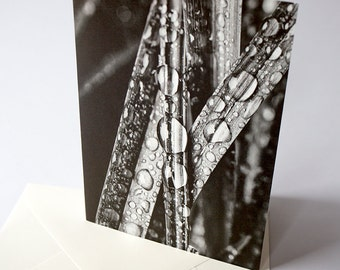 """Stationery Cards Set of 3 Folded Cards (5"""" X 7""""), Bug's Eye View of the World, Black and white photograph of raindrops on blades of grass"""