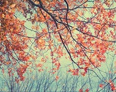 Nature Photography, Autumn Photography, New England  Landscape, Red Turquoise Wall Decor