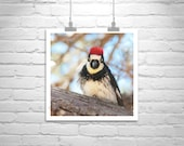 Woodpecker Bird Picture, Bird Nature Photography, Square Print, Square Art, Forest, Woodlands, Madera Canyon, Bird Art, Wall Picture