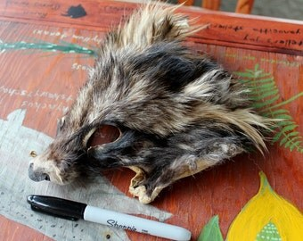 Tanuki raccoon dog shaped face for crafts, taxidermy practice, display, more DESTASH