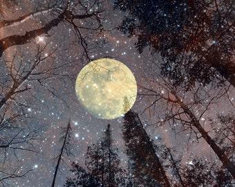 Digital Download Photography...Gazing at the Moon II.....high quality jpg...night sky..celestial..moon.. stars..trees...printable wall art