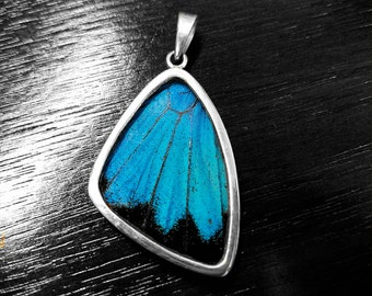 Real Butterfly Wing Jewelry Pendant  Necklace Papilio Ulysses Sterling Silver XL Wing xXFREE CHAINXx