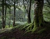 Mossy Magic Fine Art Photography Scotland Landscape Mystical Woodland Outlander inspired Soft green Romantic Home Decor shadowy Glen Trees