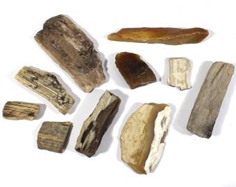 Genuine Raw Petrified Wood Fossils