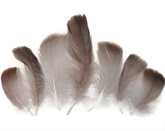 Goose Feathers, 1/4 Lb - Natural Brown Goose Coquille Wholesale Loose Feathers (Bulk) : 4151