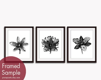 Flower Heads (Series E) Set of 3 Art Prints (Featured in Black and White) Botanical Flower Art Print / Poster