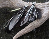 "Natural Feather and Porcupine Quill Earrings - ""Monochrome"""