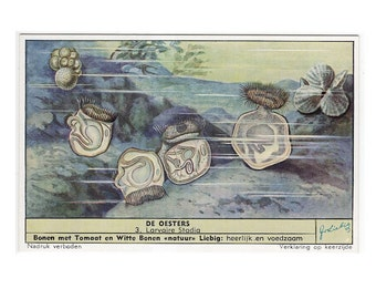 1960's OYSTER SHELLS vintage mini advertising card  -  miniature lithographs of pearl oyster bed fishing - ocean marine sealife