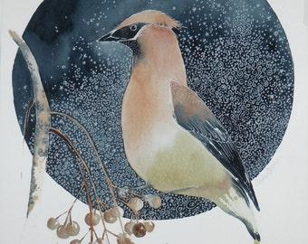 cedar waxwing watercolor painting